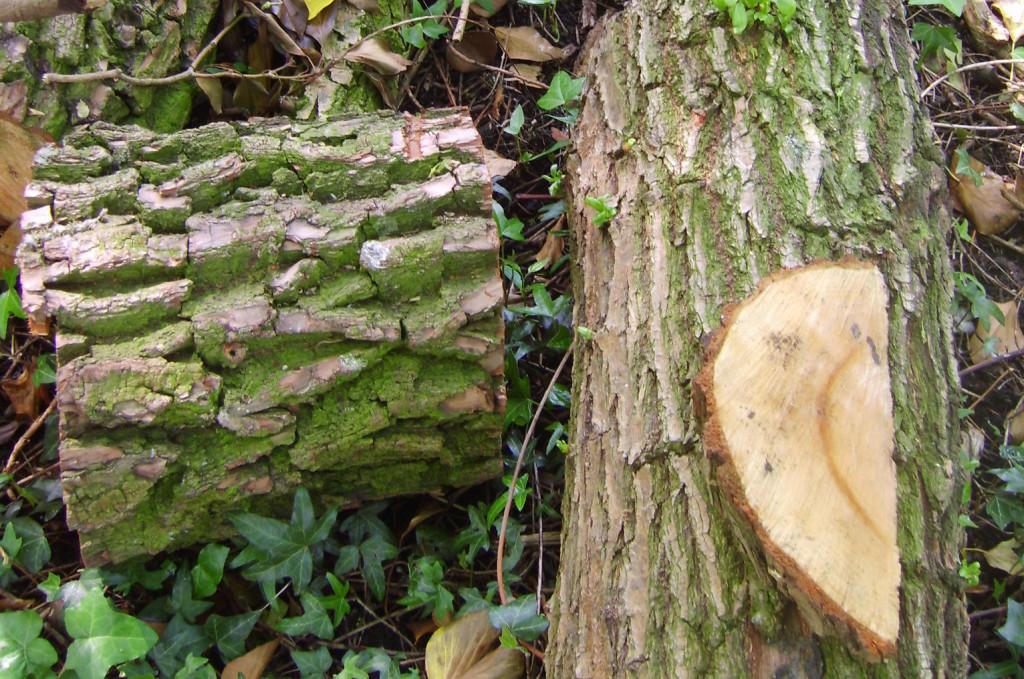 Arboretum Trompenburg 2014 020_uitsnede